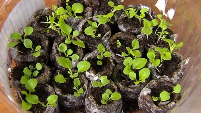 Как прорастить семена