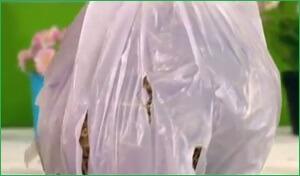 Вешенки - мешок с опилками